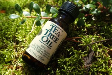 tea-tree-oil-for-lice